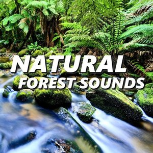 Image for 'Natural Forest Sounds'