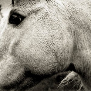 Image for 'Bonny Light Horseman'