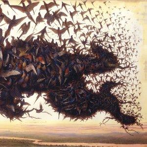 Bild für 'Falling Bough Wisdom Teeth'