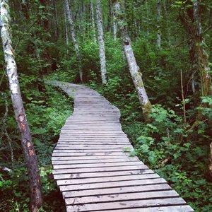 Image pour 'boardwalk'