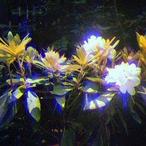 Image for 'Violet Hours'