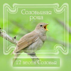 Изображение для '12 песен соловья'