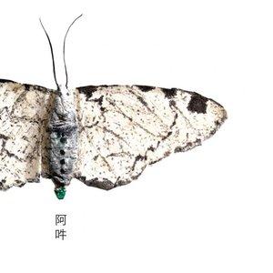 Imagem de 'AUN'