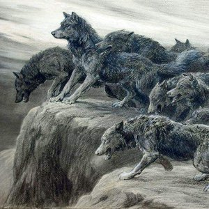 Image for 'Realm of Wolves'