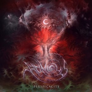 Image for 'Perspicacity'