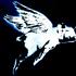Avatar for SANTi0023
