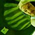 Avatar for epi_gee