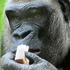 Avatar de Gorilla-