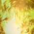 Avatar for LINK2K9