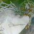 Avatar de Chateau_Kultur