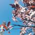 Avatar for springsunshine