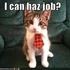Avatar for unemployedcat