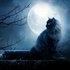 Avatar de Meowla91