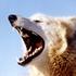 Avatar de White_Coyote