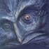 Аватар для Protey-Corrax