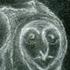 Avatar for Myxogastrid