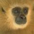 Avatar for monkeybrogan