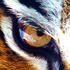 Avatar for tigerfenix