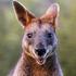 Avatar for wacky_wallaby