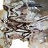 Avatar de Femtoraptor