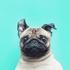 Аватар для eweks
