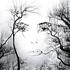 Аватар для mystiquebirdy