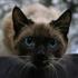 Аватар для NaikS