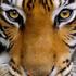 Avatar for TygrScott