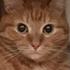 Аватар для antontutynin