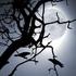 Avatar för LunarMadness