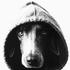 Аватар для Uuushka