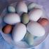 Avatar für Egg21