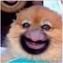 Аватар для Gorefan