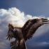 Avatar for welkinhawk
