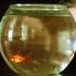 Avatar für aquariumfisch