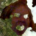 Avatar for mickbonnen