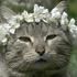 Avatar for blossomcastles