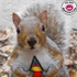 Avatar for Squirel