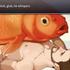 Avatar di patient_salmon