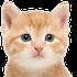 Avatar de kitty_purr_purr