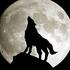 Avatar de Badwolf_Hi-Fi