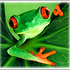 Avatar for frogZLaw