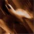 Avatar for soulfly-fan83