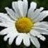 Avatar for daisyflower476